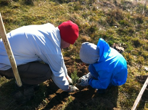 Eu și Matei plantând un pui de molid.