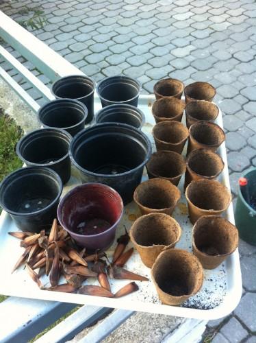 Găletușele pregătite pentru sol