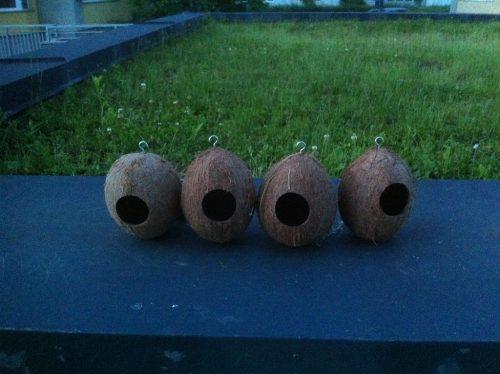 Căsuțe pentru păsări din nucă de cocos