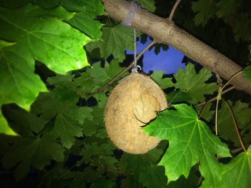 Și o facut paltinul nuci de cocos ... nu chiar, e doar o casă pentru păsărele